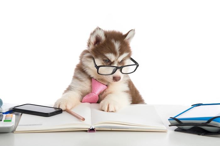 Pet Financing